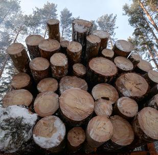 俄中兩國將聯手打擊非法供應木材行為