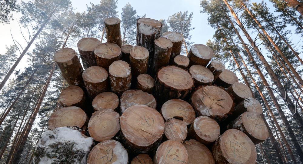 俄總理:俄必須啓用電子標籤追蹤木材流向