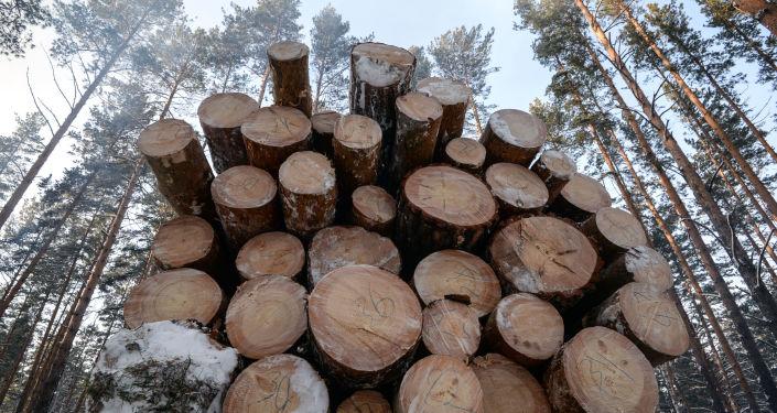 克拉斯諾亞爾斯克海關發現價值近150萬美元的對華走私木材案