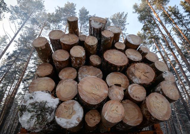 克拉斯诺亚尔斯克海关发现价值近150万美元的对华走私木材案