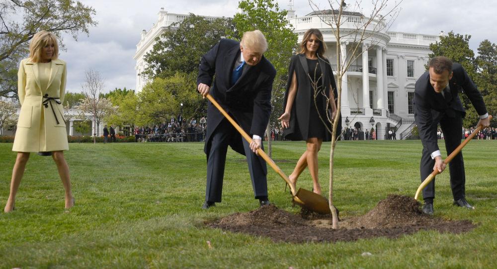 特朗普與馬克龍合栽的「友誼之樹」已死亡