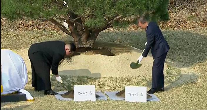 朝韩领导人在板门店共植松树