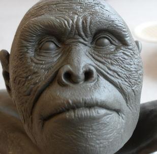 最初,人類學家根據納萊迪人解剖學的原始特點,推測他們的生活時期在200-300萬年前。但在2017年,根據對化石的分析,其年代被確定為23.6到33.5萬年前。