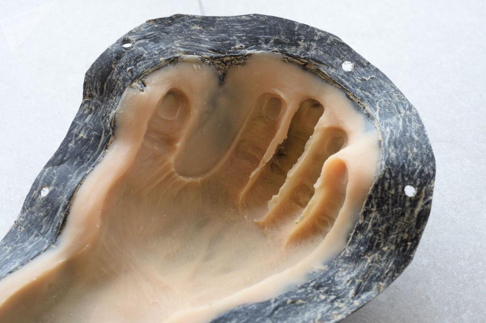 这一发现的主要意外之处在于,古人类化石遗骸要比原来推测的更年轻。 图片说明:复原手的铸造模型。
