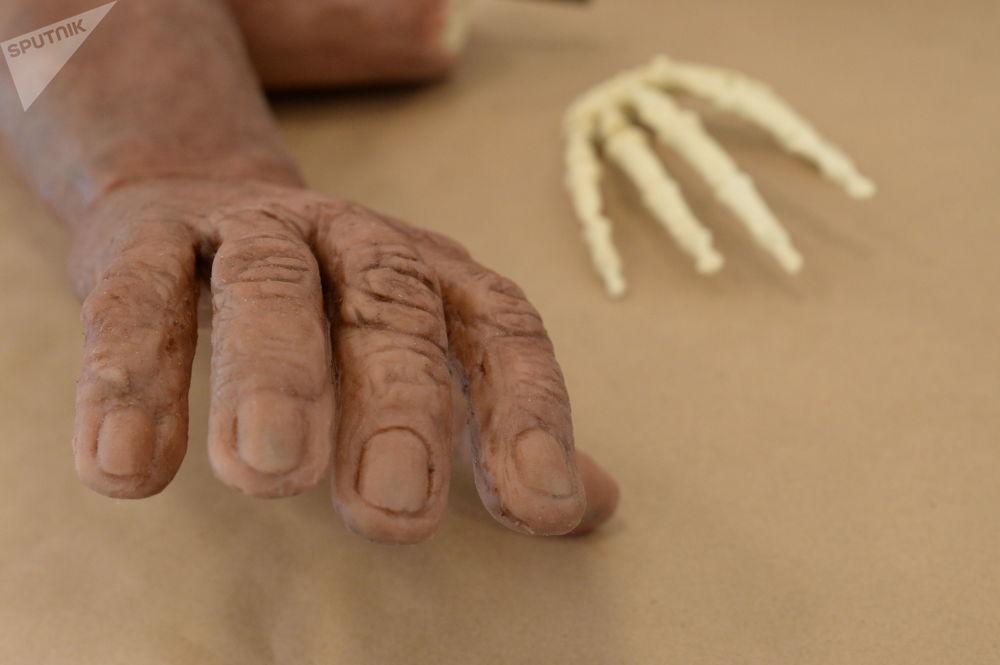 """纳莱迪人可能曾与自己的""""堂兄弟""""—现代人的直系祖先共同生活在一个星球上。 图片说明:纳莱迪人的复原手(作者-安那托利·亚历山德罗夫)和用3D打印机制作的纳莱迪人的手骨模型。"""