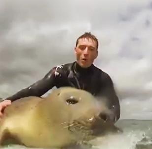 海豹玩衝浪板