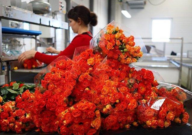 学者探索到使玫瑰更芳香和鲜艳的方法