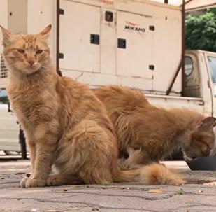 敘利亞流浪貓餵食器