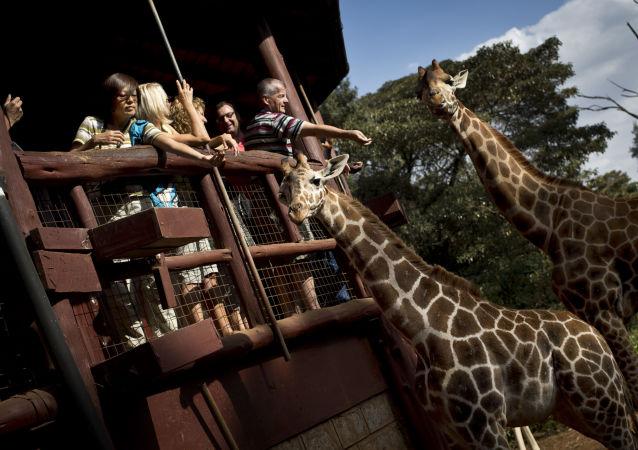 著名导演卡瓦略在拍摄中遭长颈鹿攻击死亡