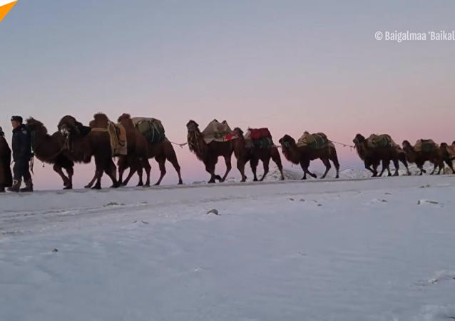 蒙古疯狂旅行者骑骆驼从乌兰巴托去伦敦 意在宣传传统游牧文化