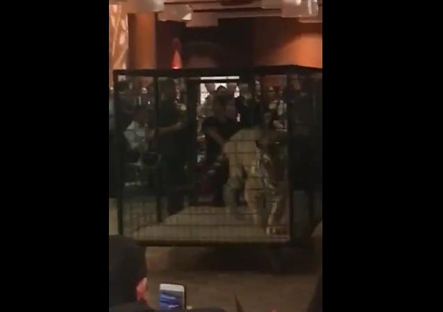 美國一中學畢業舞會請來老虎和狐猴 被批虐待動物