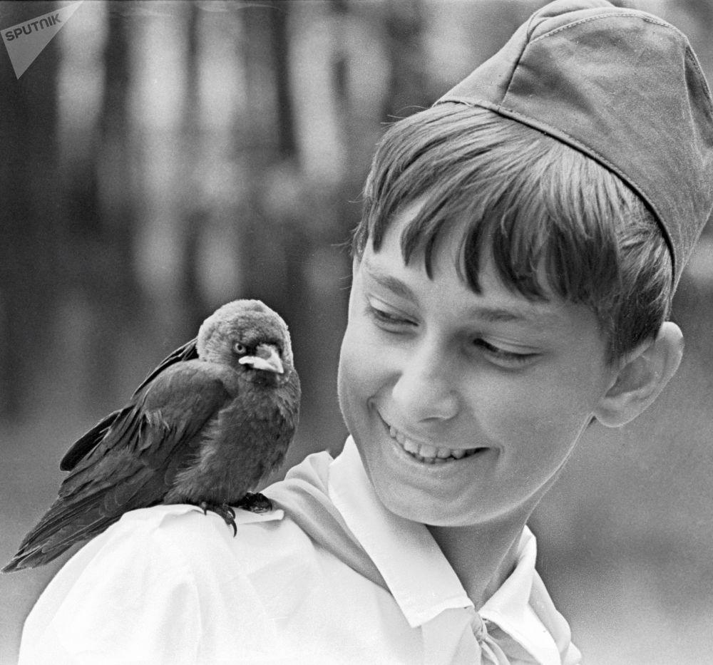 一隻小烏鴉落在鮑里索夫林業學校林管所一名少先隊員的肩頭