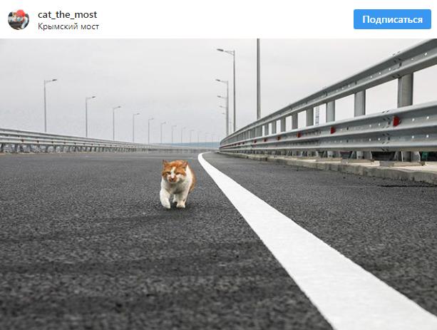 一只猫比普京率先通过刻赤海峡大桥大桥