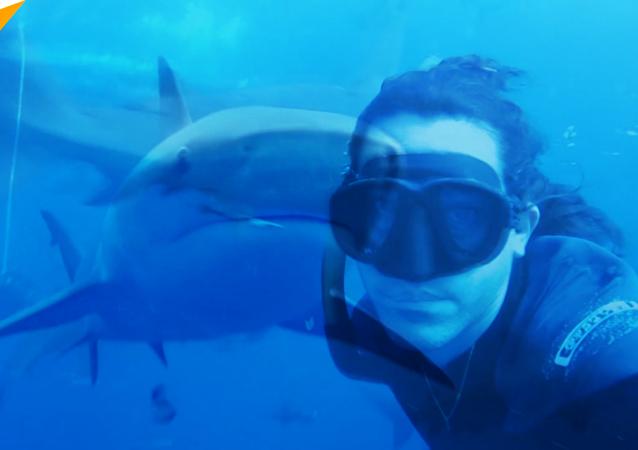 潜水者拍下与鲨鱼同游画面