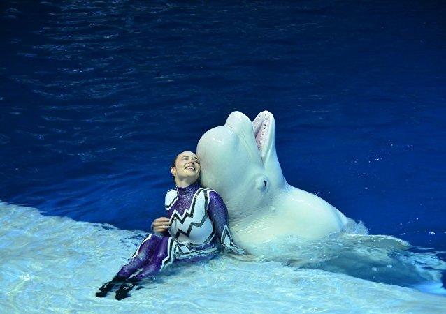 莫斯科海洋館推出水上音樂劇《夏夜的夢》