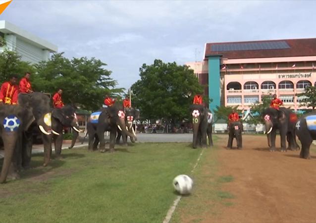 泰国大象踢足球
