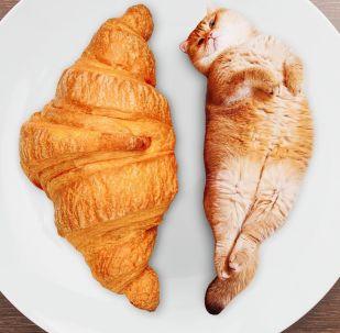 以下照片均为合成照:羊角包和猫