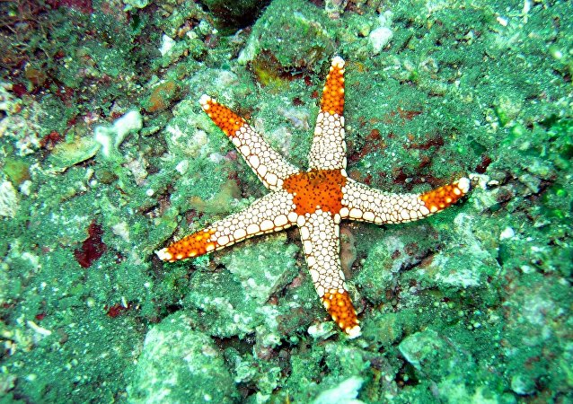 科学家:海星变异后抗病能力提高
