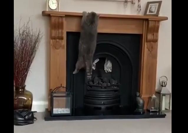 一只大肥猫试图跳到壁炉上未果反而悬挂在上面