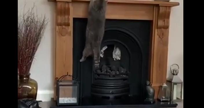 一隻大肥貓試圖跳到壁爐上未果反而懸掛在上面