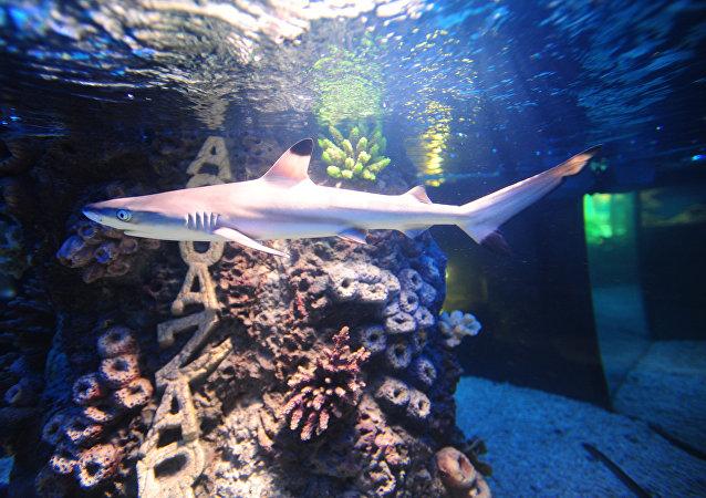 美国一伙窃贼从海洋馆偷走一条鲨鱼并用婴儿车将其运走