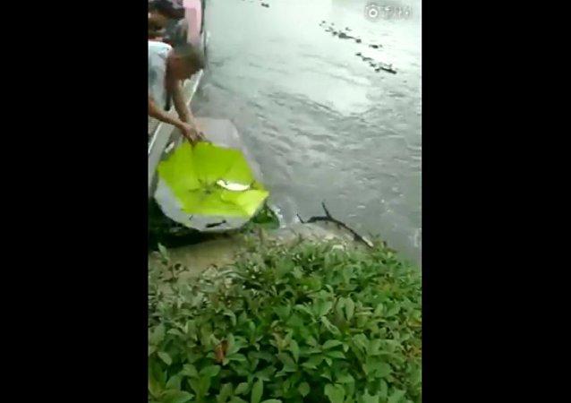 非凡雨伞捕鱼法
