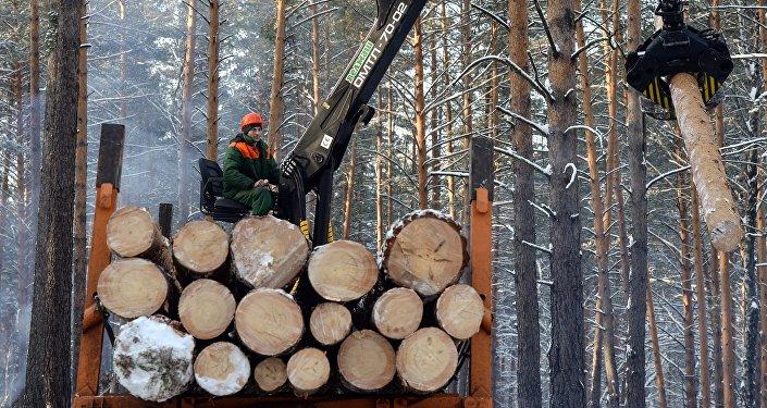 俄罗斯向中国出口木材:真相与虚构