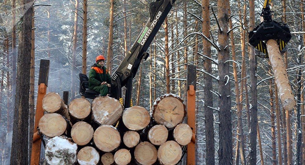 俄羅斯向中國出口木材:真相與虛構