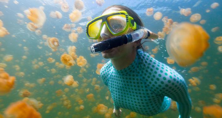 在帕劳水母湖潜水
