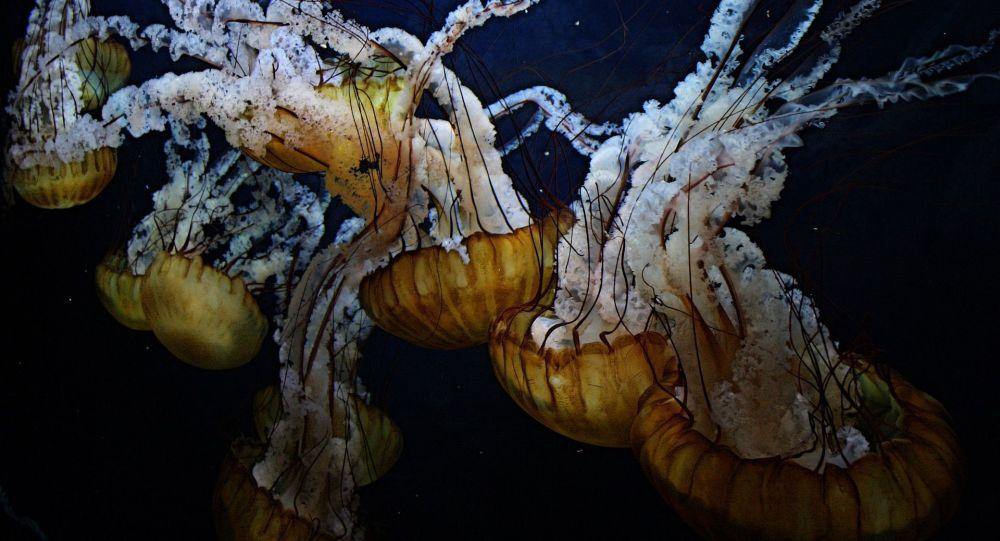 排名前五位的最危险的水母