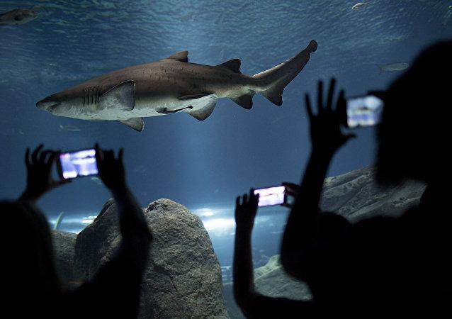 鲨鱼袭击在巴哈马拍摄的一名博主
