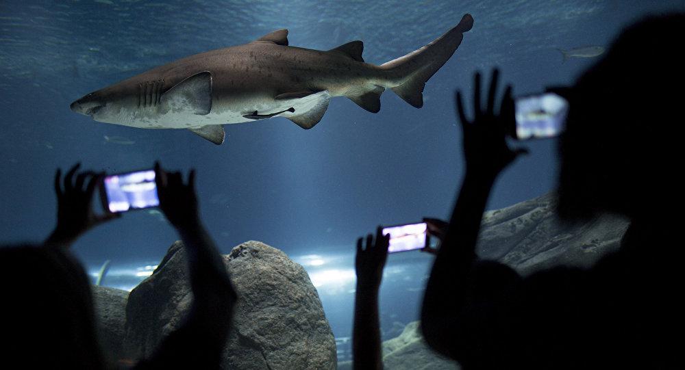 在中國一位女子掉入養鯊魚的水缸中