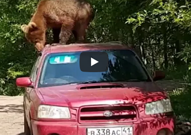 好奇棕熊爬汽車拽車門 (視頻)