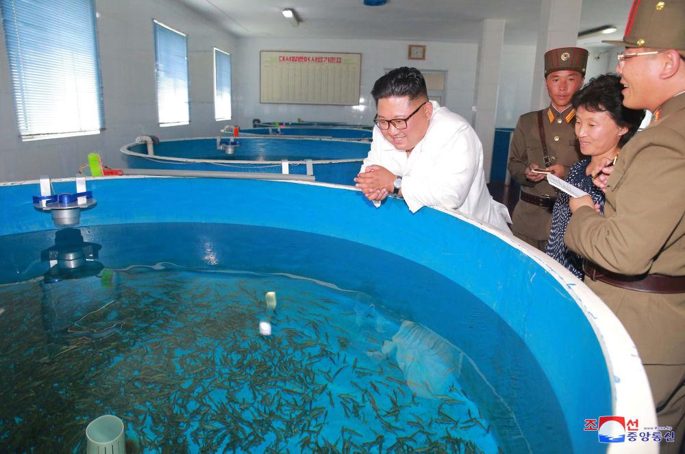 朝鮮領導人金正恩在平壤視察801部隊和部隊駐地的漁場。