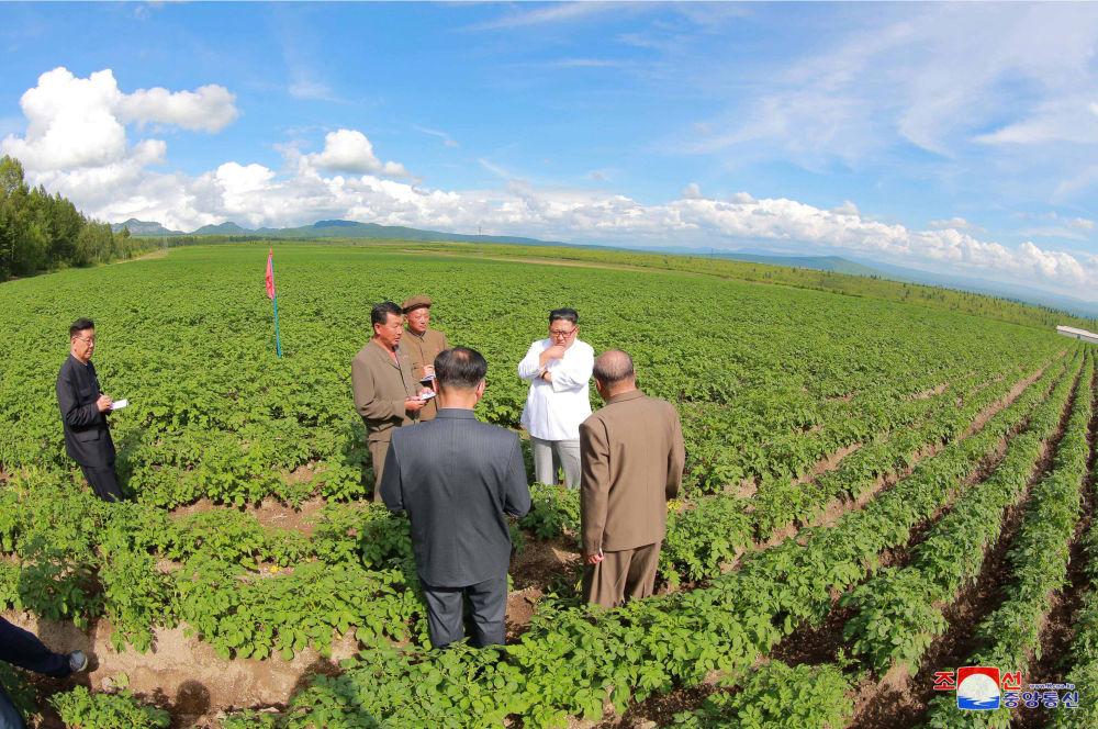 朝鲜领导人金正恩在三池渊县视察Chunghung农业企业。