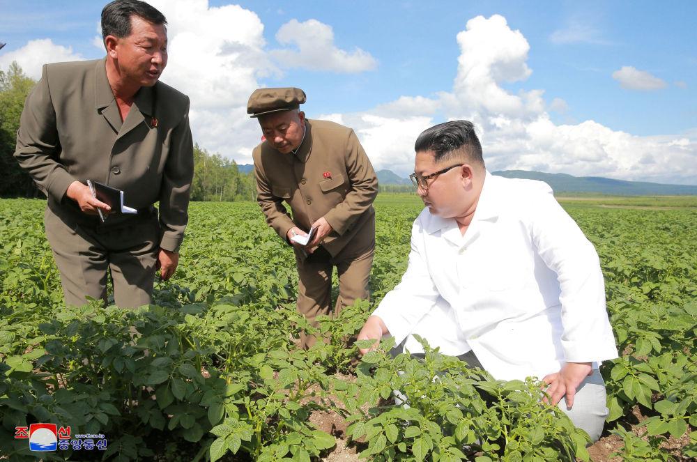 鲜领导人金正恩在视察Chunghung农场。