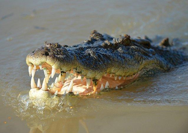 印尼一名男子在河边洗手时被鳄鱼活吞