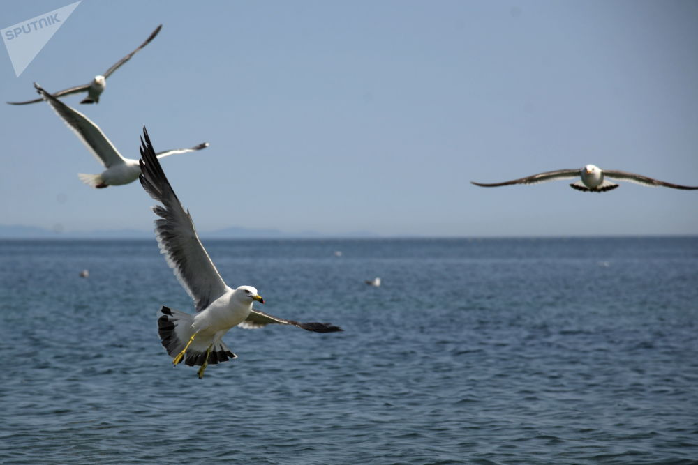 俄滨海边疆区普提雅廷岛
