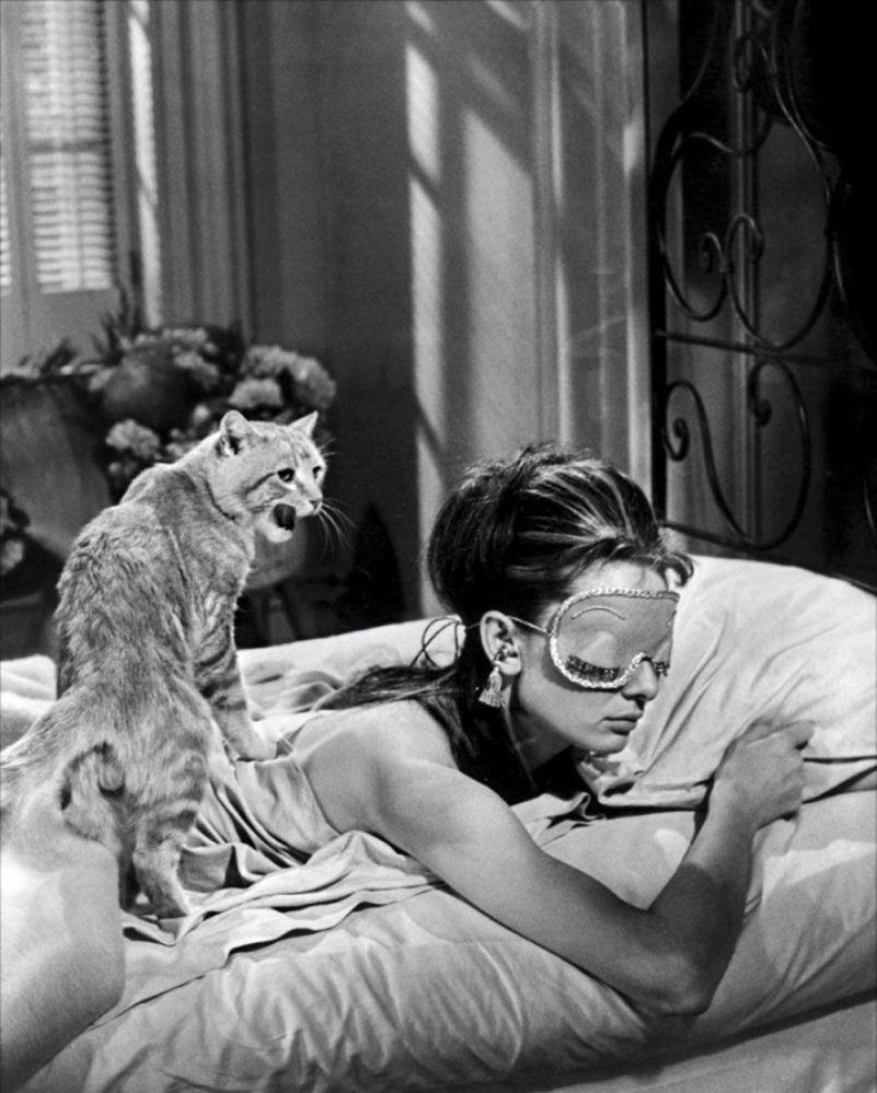最著名的貓咪