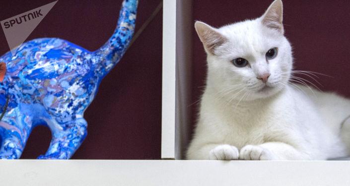 有趣的猫:2018年最受大家欢迎的猫排行榜