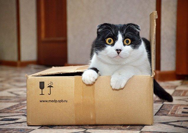 猫咪为什么喜欢卧在盒子里?