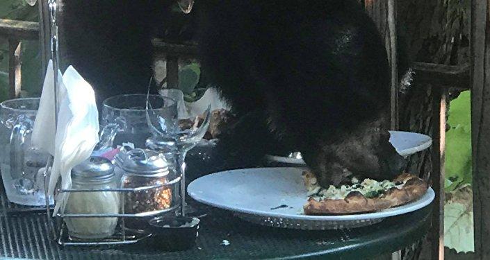 一隻狗熊爬進餐館搶走顧客的披薩餅