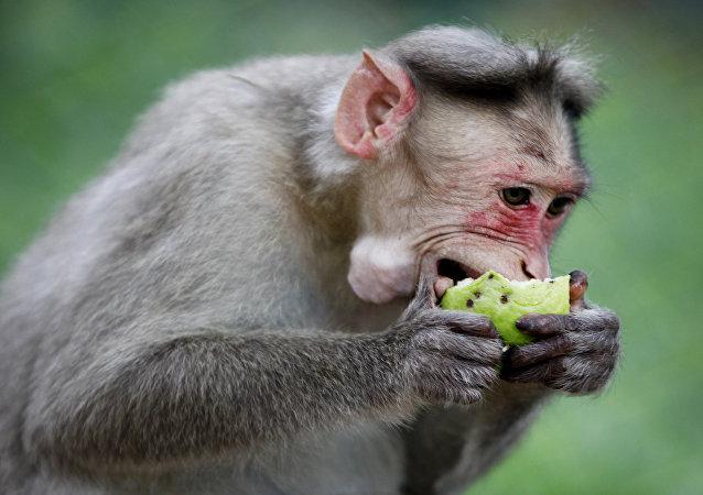 狂怒的猕猴紧紧抓住婴儿被视频拍到