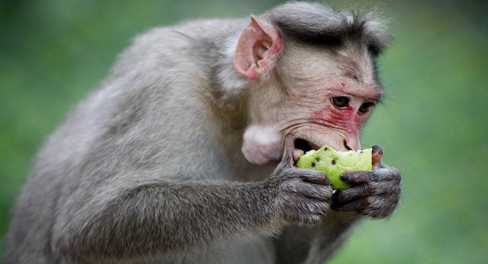 狂怒的獼猴緊緊抓住嬰兒被視頻拍到