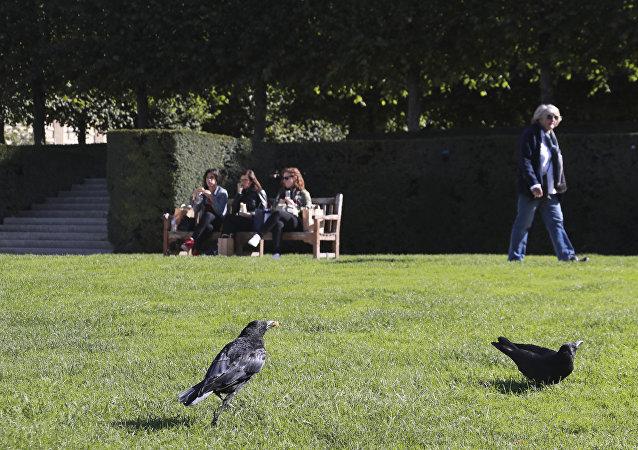 法國公園訓練烏鴉撿垃圾