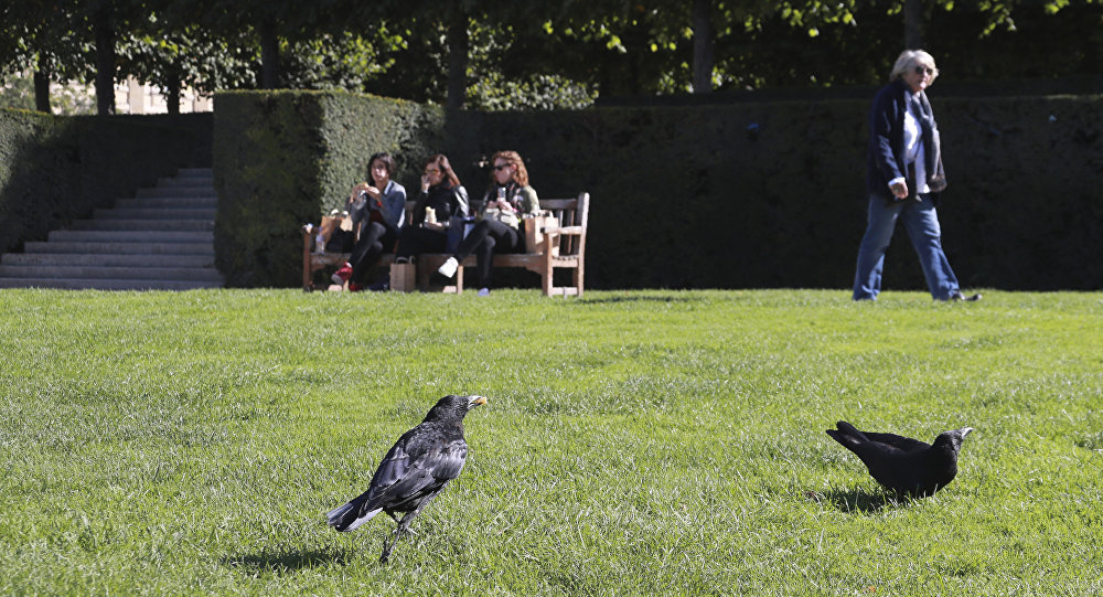 法国公园训练乌鸦捡垃圾