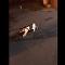 一隻做「和事佬」的狗使貓咪免於打鬥