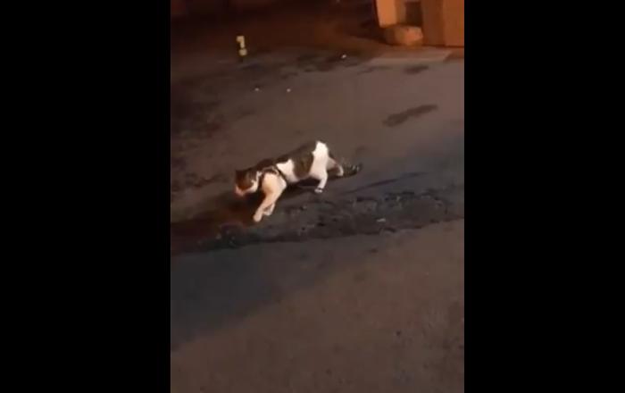 """一只做""""和事佬""""的狗使猫咪免于打斗"""