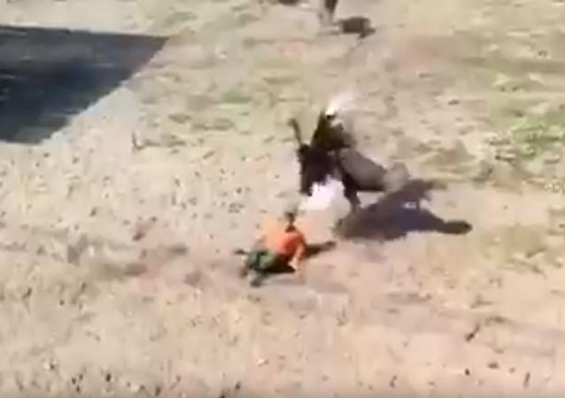 俄奔薩市的一隻鴕鳥因將動物園工作人員視為對手而向其發起攻擊