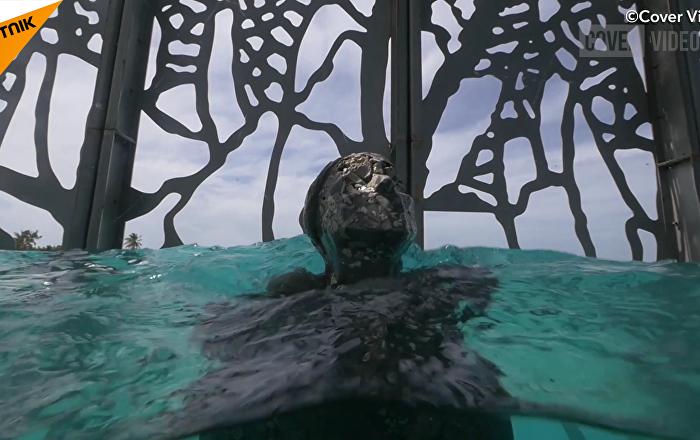 马尔代夫水下画廊